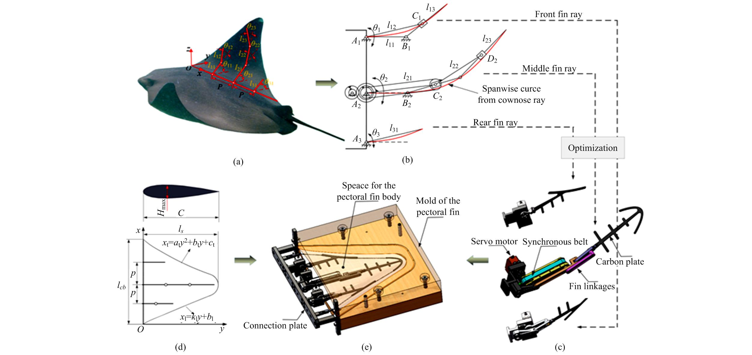 Bionic Flapping Pectoral Fin with Controllable Spatial Deformation