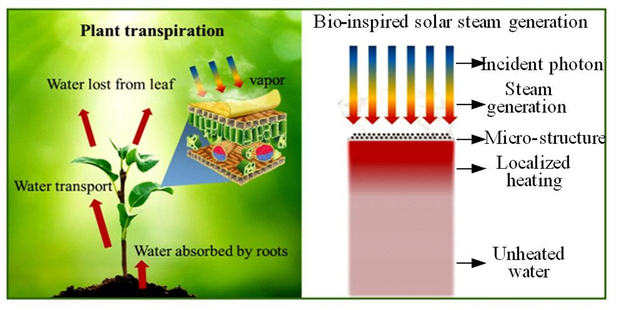 Bio-inspired Recyclable Carbon Interface for Solar Steam Generation
